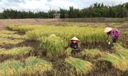 Công ty nông sản hữu cơ vốn 0 đồng kêu gọi thành công 10 tỉ đồng: Chúng tôi cần người đồng hành