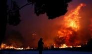 Cháy rừng Hy Lạp: Hàng chục người vượt không nổi biển lửa, chết gục trong sân nhà