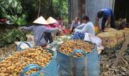 Đồng Tháp đẩy mạnh mô hình hội quán nông dân