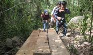 Cận cảnh khu rừng cổ thụ ở Bình Định bị lâm tặc triệt hạ