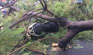 Gió quật ngã cây xanh ở Công trường Mê Linh, đè bị thương 2 người