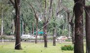 Lãnh đạo Công viên Gia Định: Cây chết là do cây không… chịu sống!