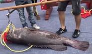 Trung Quốc: Xẻ thịt Vua cá lạ giá gần 1 tỉ để lấy hên