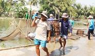 Cần có trung tâm logistics nghề cá cho ĐBSCL