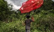 Những người săn bướm bí ẩn ở Indonesia