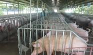 Khẩn cấp ngăn chặn dịch tả lợn châu Phi vào Việt Nam