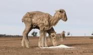 Nông dân nhiều nước kêu cứu vì hạn hán