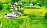 Lúa đã chín vàng khắp thung lũng Mường Hoa, xách ba lô lên và đi thôi!