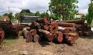 Vụ trùm gỗ lậu Phượng râu: Không kỷ luật lãnh đạo Bộ đội Biên phòng Đắk Lắk