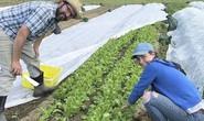Lớp học nông nghiệp hữu cơ ngày càng hot ở Mỹ