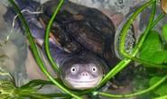 Bác sĩ tá hỏa phát hiện rùa chết trong... chỗ kín của cô gái