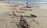 Hơn 7 tấn rác thải bủa vây 8 km bờ biển Đà Nẵng