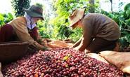 Khuyến khích tiêu thụ cà phê nội địa