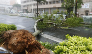 Chưa hồi phục sau bão Jebi, Nhật Bản lại hứng bão Trami