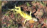 Kỳ nhông, rùa biển hóa đá vì bom bão tuyết ở Mỹ