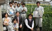 Quản lý chặt doanh nghiệp đưa thực tập sinh sang Nhật Bản