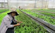 Học người Nhật làm nông nghiệp bền vững