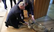 Tổng thống Putin được tặng quà đặc biệt ở Serbia