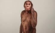 Vấp khúc xương, cậu bé phát hiện tổ tiên mất tích của loài người