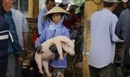 Nghề độc ở chợ heo lớn nhất Quảng Nam