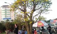 Lão mai được hét giá 3 tỉ đồng tại chợ hoa Xuân Đà Nẵng