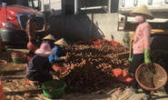 Người tiêu dùng TP HCM chê rau trái Trung Quốc