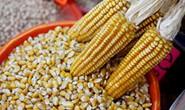Vụ gian lận thực phẩm organic gây rúng động ở Mỹ