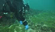 Bí ẩn đáy hồ Constance: thủy cung ma quái xây bởi… người đồ đá?