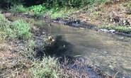 """Vụ đổ dầu thải xuống nguồn nước sông Đà: Phải cấp bách """"siết"""" lại vấn đề an ninh nguồn nước"""