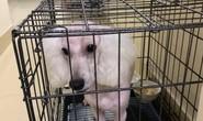 Trộm chó xong, hai cẩu tặc yêu cầu chủ chó chuộc 5 triệu đồng