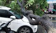 Đà Nẵng: Ảnh hưởng nhẹ của bão, hàng loạt cây xanh đã bật gốc