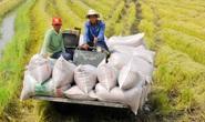 Nghịch lý gạo Việt: Ngon nhất thế giới nhưng bán giá bèo