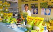 Gạo Việt ngon nhất thế giới có gì đặc biệt, mua ở đâu?