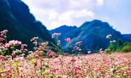 Sắc hồng cao nguyên đá Hà Giang