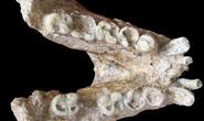 Sự thật ngã ngửa về một loài người khác cổ xưa và khổng lồ