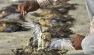 Hơn 2.400 con chim chết bên vùng hồ rộng gần 200 km vuông