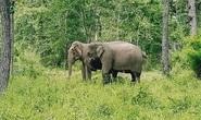 Đạp xe xuyên rừng Yok Đôn ngắm voi
