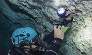 Dấu vết cá mập quái thú 2,5 triệu tuổi xuất hiện… giữa thành phố