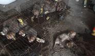 Vụ thú rừng chết dần trong kho hải quan: Bất ngờ kết quả xác minh nguồn gốc