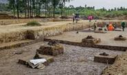 Phát hiện bãi cọc quý hàng ngàn năm tuổi ở Hải Phòng