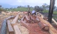 Khởi tố 10 đối tượng mở công trường khai thác gỗ lậu ở 2 tỉnh Đắk Lắk - Khánh Hòa