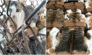 Số phận bi thảm của những con mèo bị luộc sống ở Trung Quốc