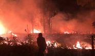 Làm rõ vụ cháy rừng trong đêm ở Phú Quốc