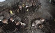 Vụ thú rừng chết dần trong kho hải quan: Hé lộ lý do kiểm lâm không tiếp nhận vụ việc