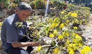 Nông sản rớt giá, các nhà vườn giảm giá bán chạy hoa kiểng