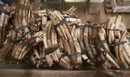 Uganda bắt 2 công dân Việt buôn lậu ngà voi, vảy tê tê