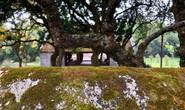 Ngắm vẻ đẹp huyền bí, cổ kính của ngôi chùa ngàn tuổi Bổ Đà