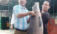"""Đầu năm bắt được cá trắm đen """"khủng"""" nặng 33 kg, dài 1 m"""