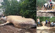 Cá voi dài 11 m chết trong... rừng rậm Amazon