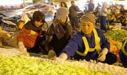Công nhân xuyên đêm trang trí cầu Chương Dương phục vụ Hội nghị Thượng đỉnh Mỹ-Triều